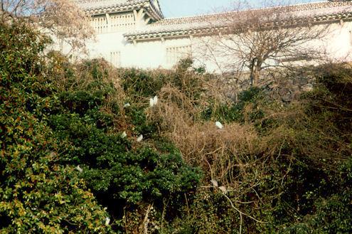 1984-009.jpg